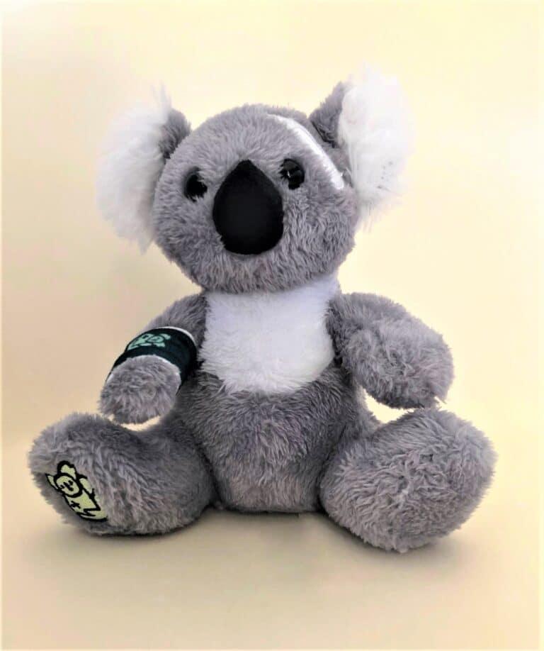 "Cuddles front Port Stephens Koala Hospital Mascot ""Guula"""