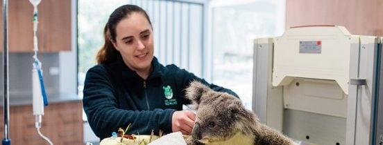 The Clinic Port Stephens Koala Sanctuary - Port Stephens Koalas